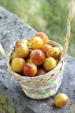 Mirabelle plums Stock Photos
