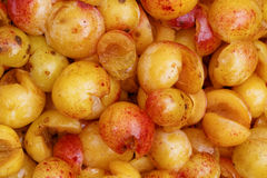 Mirabelles - Cut open and Cored. Closeup of cut open and cored fresh mirabelles royalty free stock photos