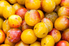 Mirabelles plums Stock Images