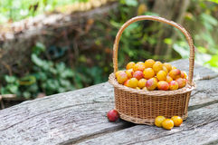 Mirabelles plums Stock Photos