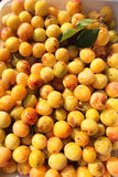 Mirablle plums Royalty Free Stock Photos