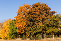 The miracle of autumn Stock Photography
