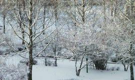 miracle d'hiver Photo libre de droits