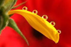 Miracle drops. Miracle water drops with flowers inside stock photography
