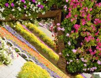 Miracle garden in dubai Royalty Free Stock Image
