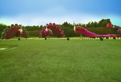 Miracle Garden in Dubai Stock Photo