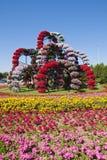 Miracle Garden ,Dubai Stock Photography
