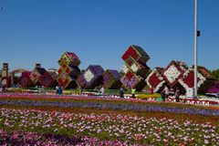Miracle Garden ,Dubai Royalty Free Stock Images