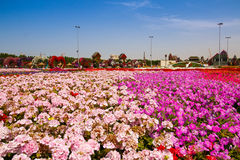 Miracle garden Stock Image