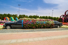Miracle garden. DUBAI, UAE - MARCH 28: Limousine in Dubai Miracle Garden in the UAE on March 28, 2015. It has over 45 million flowers royalty free stock photography