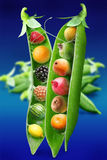 Miracle pea. Objects on blue background stock image