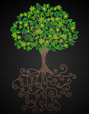 The Miracle Tree with Leaves Stock Photo