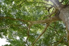 Miracle under big trees Royalty Free Stock Images