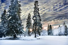 Miracle winter forest covered by snow. Beautiful frozen pine-trees and mysterious sky. Frozen lake. Sunset. Saint-Petersburg Stock Photos