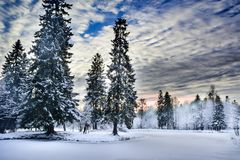 Miracle winter forest covered by snow. Beautiful frozen pine-trees and mysterious sky. Frozen lake. Evening after sunset. Saint-Petersburg Stock Photography