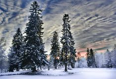 Miracle winter forest covered by snow. Beautiful frozen pine-trees and mysterious sky. Frozen lake. Red sunset. Saint-Petersburg Royalty Free Stock Photo