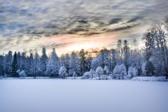 Miracle winter forest covered by snow. Beautiful frozen trees and mysterious sky. Frozen lake. Red sunset. Saint-Petersburg Royalty Free Stock Images