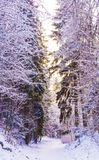Miracle winter forest covered by snow. Beautiful frozen trees. Saint-Petersburg Royalty Free Stock Photo