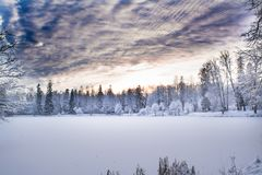 Miracle winter forest covered by snow. Beautiful frozen trees and mysterious sky. Frozen lake. Evening after sunset. Saint-Petersburg Stock Photos