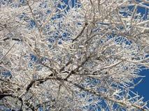 Miracles de nature d'hiver Image libre de droits