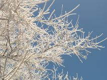 Miracles of winter nature Royalty Free Stock Images