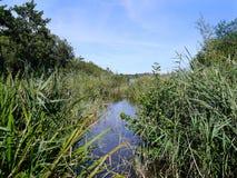 Mirada abajo de la pequeña corriente del agua en la región pantanosa Foto de archivo libre de regalías