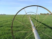 Mirada abajo de un rollo lateral en campo de la alfalfa Fotos de archivo libres de regalías