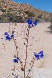 Mirada abajo de una corriente de las flores de Cantorbery Belces Imagen de archivo