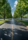 Mirada abajo del camino alineado árbol Foto de archivo libre de regalías