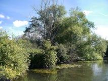 Mirada abajo del río con los árboles a la izquierda Fotografía de archivo libre de regalías