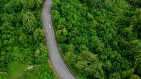 Mirada abajo en el camino en el bosque de impresionante almacen de metraje de vídeo