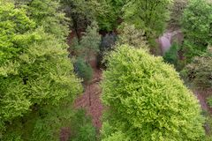 Mirada abajo en los árboles Imagen de archivo libre de regalías