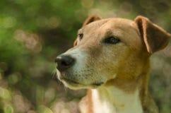 Mirada adorable del perrito Fotografía de archivo