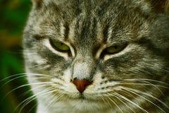 Mirada cansada de un pequeño gato Fotos de archivo