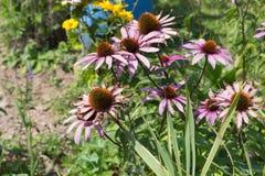 mirada cercana en las flores coloridas Imagenes de archivo