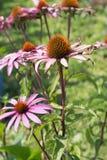 mirada cercana en las flores coloridas Foto de archivo