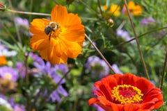 mirada cercana en las flores coloridas con la abeja Imágenes de archivo libres de regalías