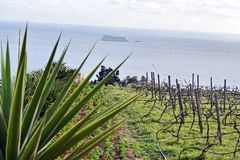 Mirada de Fifla de un viñedo del clifftop, Ghar Lhapsi, Malta Fotografía de archivo