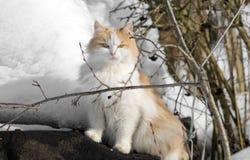 Mirada de gatos fotos de archivo