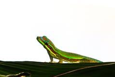 Mirada de la salamandra Fotografía de archivo libre de regalías