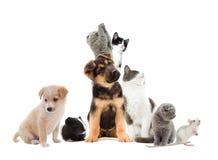 Mirada de los animales domésticos imagen de archivo