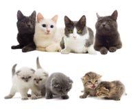 Mirada de los gatos Fotografía de archivo