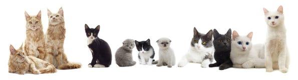 Mirada de los gatos Foto de archivo libre de regalías