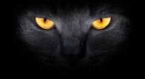 Mirada de los gatos de la oscuridad Foto de archivo