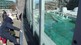 Mirada de los visitantes en los animales de un parque zoológico almacen de video