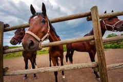 Mirada del caballo fuera de la pajarera Imagen de archivo