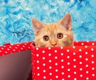 Mirada del gatito fuera de la caja de regalo Imágenes de archivo libres de regalías