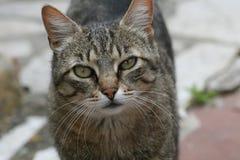 Mirada del gato Fotografía de archivo