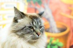mirada del gato Fotografía de archivo libre de regalías