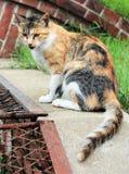 Mirada del gato a continuación Foto de archivo libre de regalías